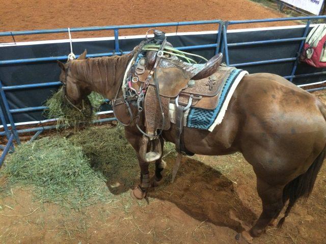 Cavalo se alimenta na beira da arena - Prova do Issao / Foto Eugênio José