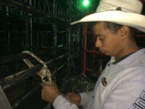 Fabrício arrumando a corda antes da montaria / Foto: Eugênio José