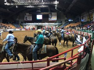 cavalos arena